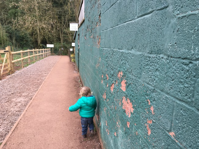 toddler on path walking next to green painted wall