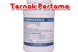 COTRIMOXAZOLE 960 Mg Untuk Pedet Sapi Kambing