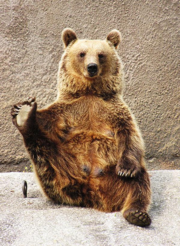 yoga bear 7 pics amazing creatures