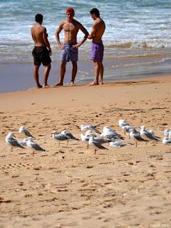 beach chatter