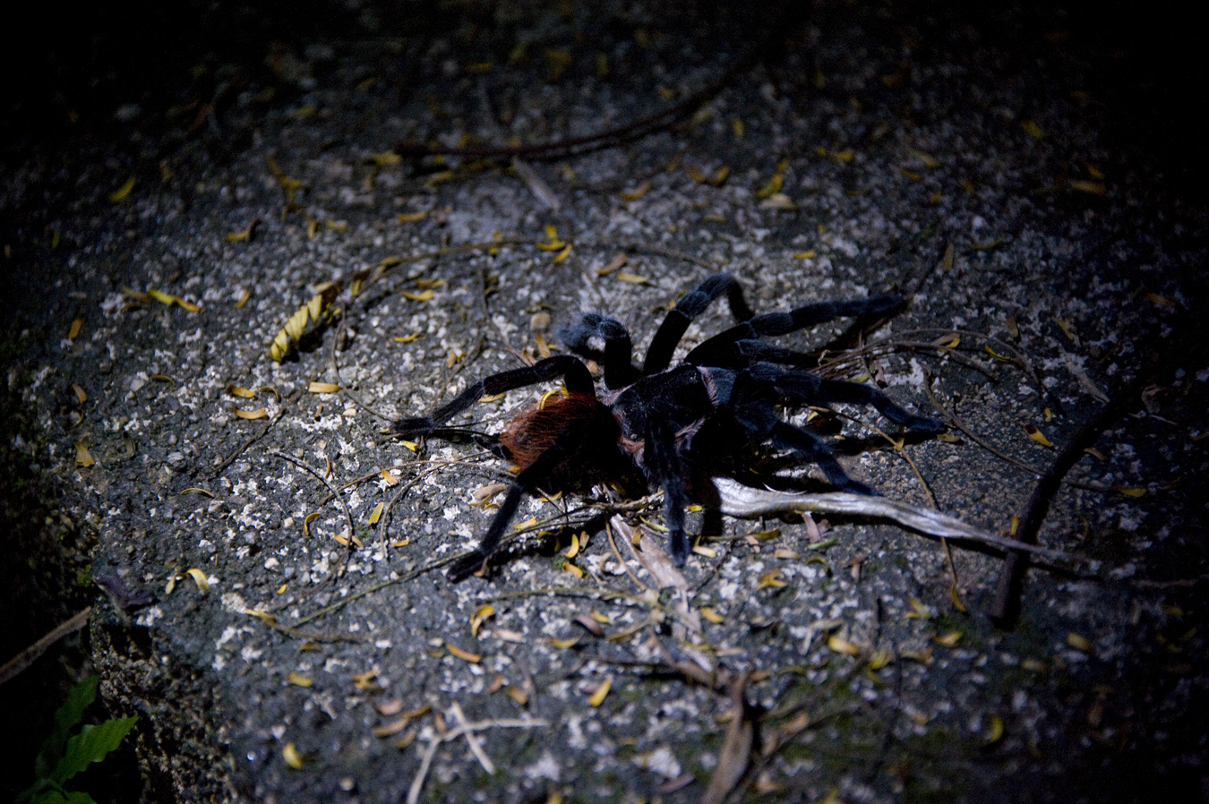 a spiders lust