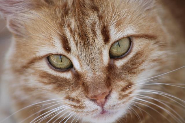 Download 95+  Gambar Kucing Jantan Lucu HD