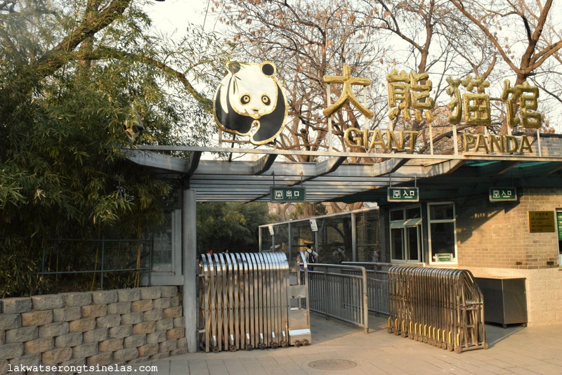THE SHORT WINTER STROLL AT BEIJING ZOO   Lakwatserong Tsinelas THE SHORT WINTER STROLL AT BEIJING ZOO