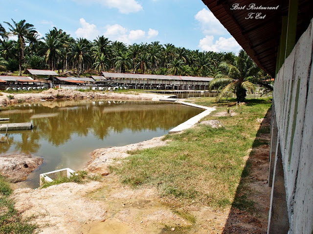 Desaru Crocodile Farm
