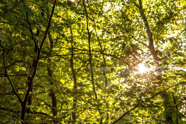 Bad Harzburger Teufelsstieg  Wanderung-Harz  Wandern – Von Bad-Harzburg auf den Brocken  Wandern-im-Harz  Abstieg Goetheweg zum Torfhaus 02