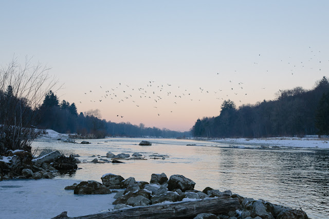 river birds sunset