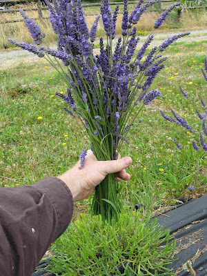 Jasa Tukang Taman Lamongan tanaman hias lavender