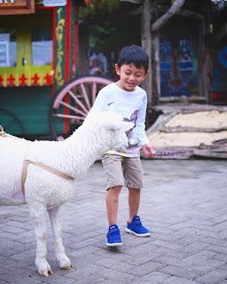 Bermain Dengan Binatang Imut - Tempat Wisata Bandung