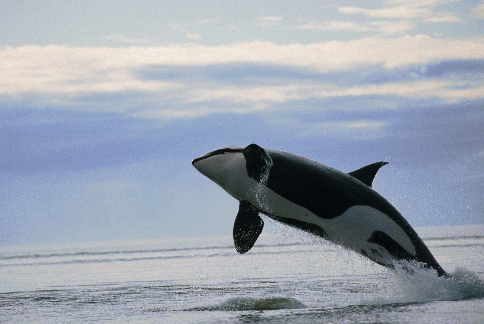 Tiburones Y Otros Reyes Del Oceano En Hd Primera Partehot -2523