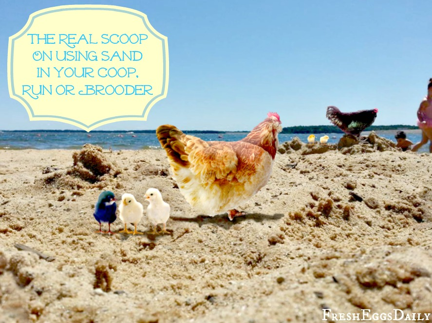 The Real Scoop on Using Sand in your Chicken Coop, Run or Brooder