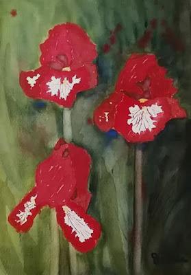 Red Irises - Watercolor - JKeese