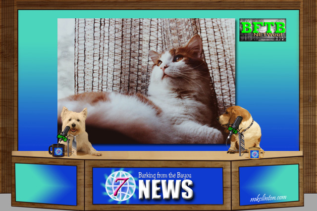BFTB NETWoof News with two dog co-anchors