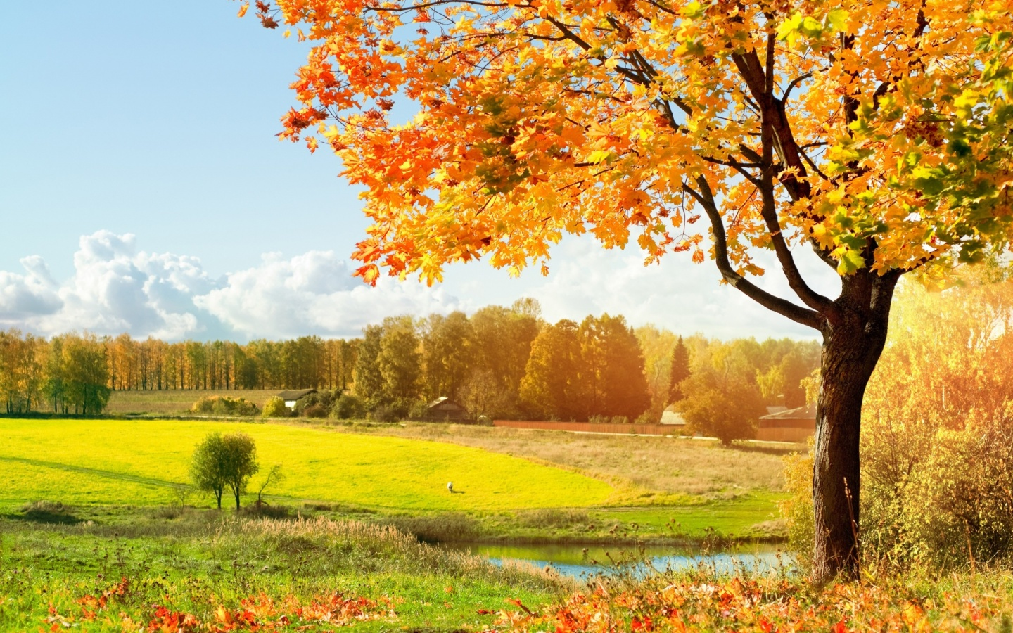 Life is Better with a Cute Outfit: Single Tree, Green Tree Wallpapers for Desktop Background Free