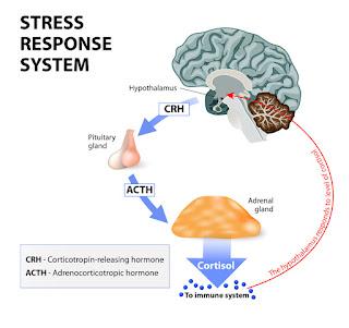 sistema de resposta do estresse - dra claudia sa