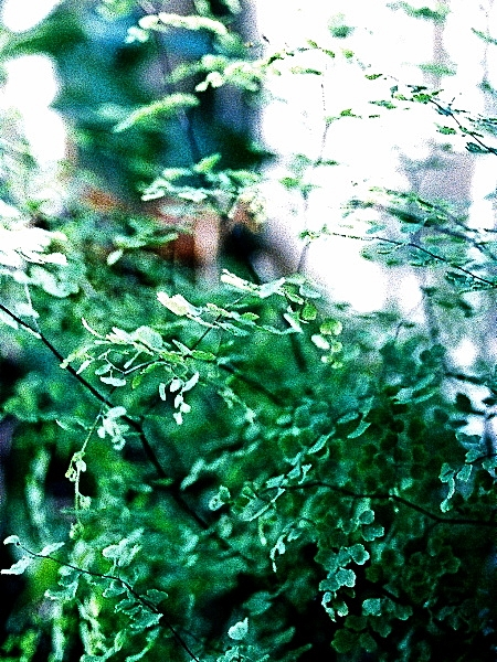 In the Garden, Olympus Pen FT 02