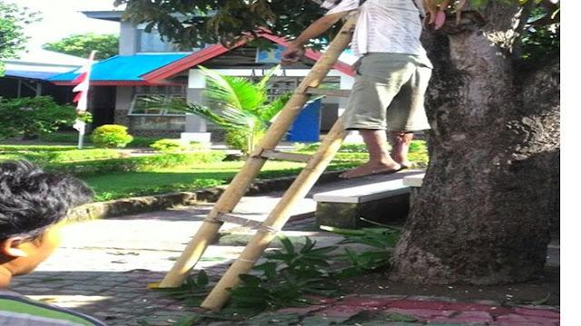 BREAKING NEWS : Napi Pencabulan ini Tewas Gantung Diri di Pohon Mangga
