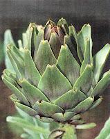 Αγκινάρα σπορά φύτεμα καλλιέργεια