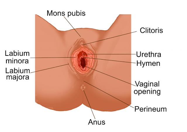 Berikut Tips Menjaga Kesehatan Organ Intim Wanita (Female Genitalia)