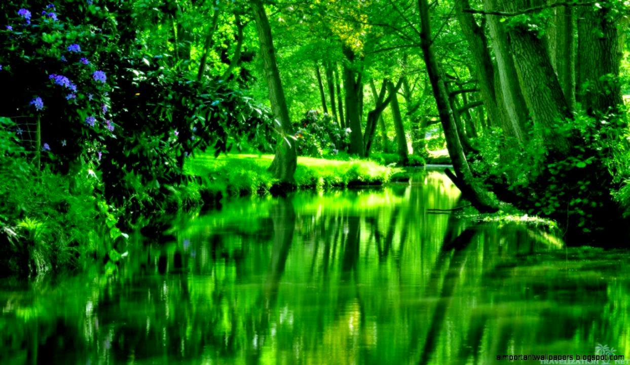 Misty Green Forest Nature River Beautiful 1ziw: Nature Beautiful Green River Forest Hd Wallpaper