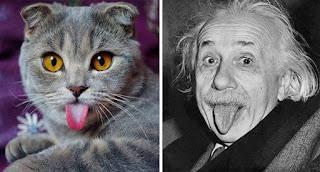 los dobles de los famosos - humor - einstein