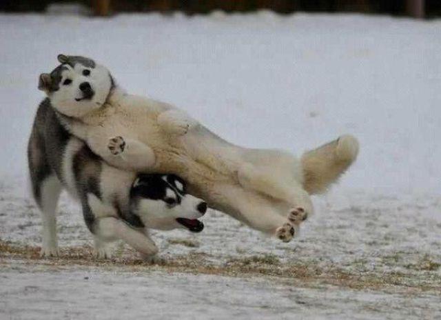 world funny animals fu...