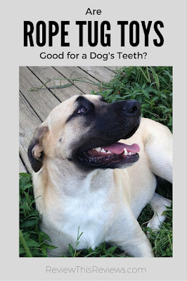 """Will your dogs have healthier teeth if they play with rope tug toys? Evidence in our family says the answer is """"yes."""""""