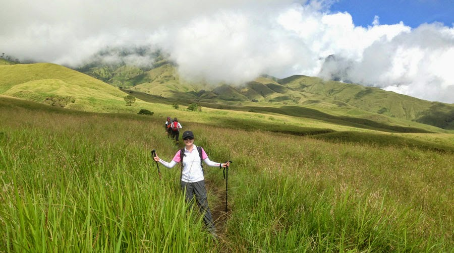 Savanna Grass Tall at Sembalun Lawang altitude 1500 m of Mount Rinjani