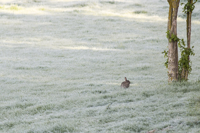 Wonderful Warblers