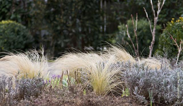 Auch im Winter kann ein Staudenbeet attraktiv sein - dank Immergrüner Gehölze und Gräsern
