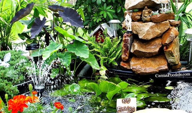 Backyard pond, WaterGarden,