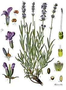 aromaterapia y permacultura en españa
