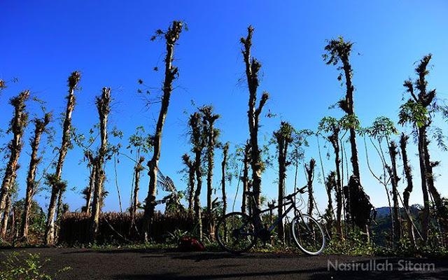 Memotret sepeda di lahan Pohon Kayu Putih Imogiri, Bantul