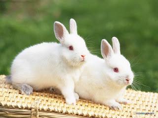 Conejo, coño