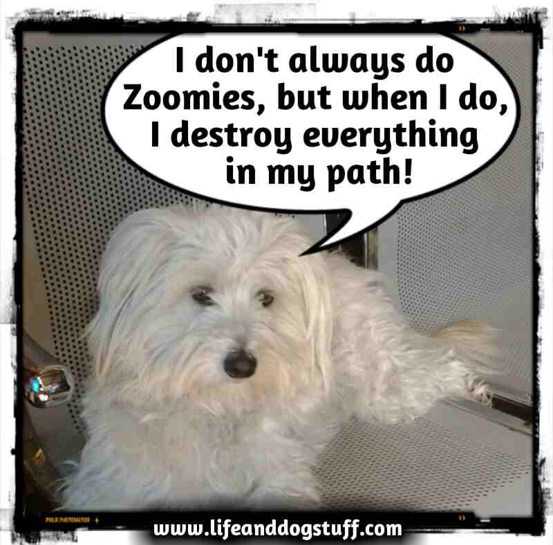 what are zoomies for dogs