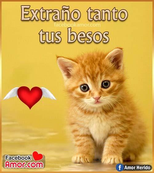 imágenes bonitas de gatos con frases amor