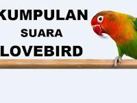 Download Kumpulan Suara Burung Lovebird mp3 Gacor Ngekek Panjang Terlengkap