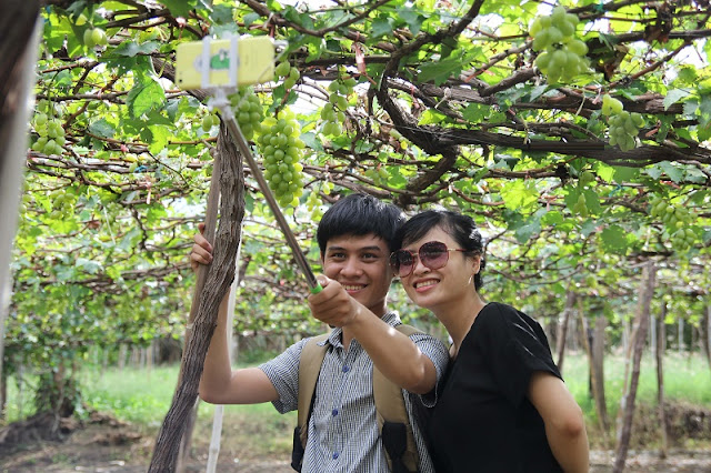 Discover Ninh Thuan vineyards in summertime 3