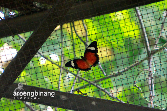 museum serangga dan taman kupu-kupu tmii