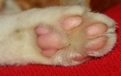 Fotos de hongos en la piel de los perros