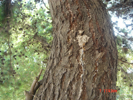 Identifying Signs of Stress or Decline in Your Trees
