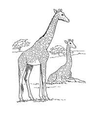 Adorable African Giraffe Coloring Pages Animals