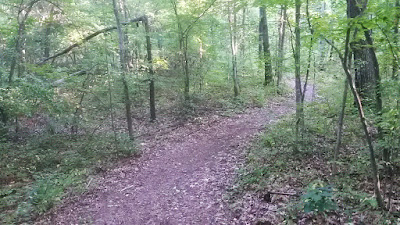 nice sinuous singletrack trail just south of Ashley Pond