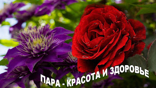 клематис +и плетистая роза