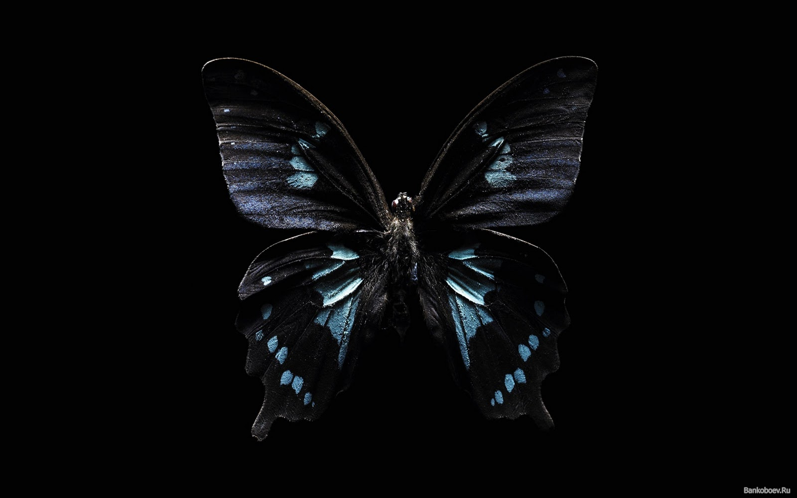 dark butterfly wallpaper desktop - photo #9