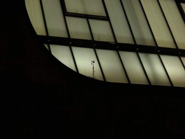 Silhouette of plant in front of lighted roof of University Press, Oxford
