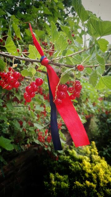 ribes rosso e solstizio d'estate, foodfilebasilicata