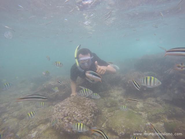 Saya Snorkeling di Pantai Nglambor 9
