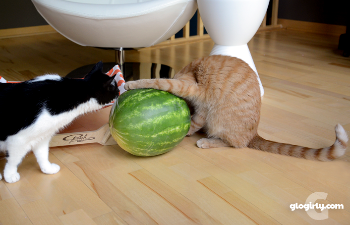 glogirly cats watermelons
