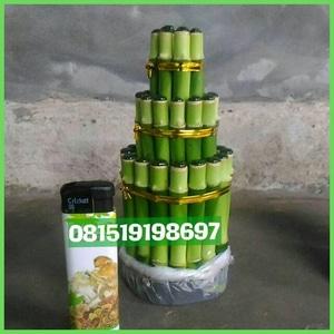 Pusat jual Lucky Bamboo | Bambu hoki, Pagoda, Spiral, Guci, Satuan PerBatang