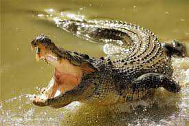 chambal-valley-is-now-feared-by-the-horror-of-crocodiles